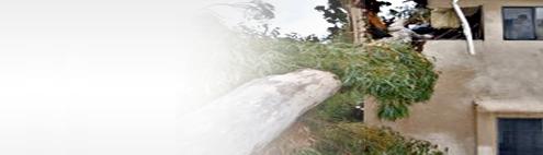 tree-risk-assessment