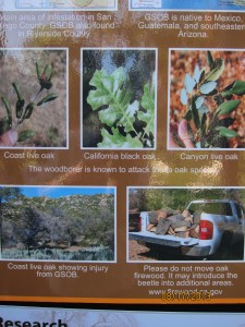 Stop using infected wood for fire wood and don't transport the wood, you are spreading the disease