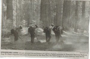 Protecting Redwood Trees