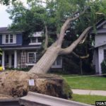 Soil failure resulted in tree loss.